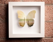 From the Earth: Framed Paper Butterfly with Fields & Arrows