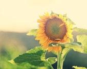 Sunflower Photography Flower Photography Nature Photography Yellow Summer Decor Sunny Green pastel wall art  Fine Art Photography Print
