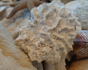 Vintage  Wavy & Textured Brain Coral, Lovely Pattern, Possibly Fossilzed, from Old Beachcomber's Collection, Cabinet of Curiosities Vibe