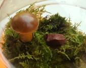 Terrarium Mushrooms Fairy Garden Decor Crafts Brown Natural 3 Pack