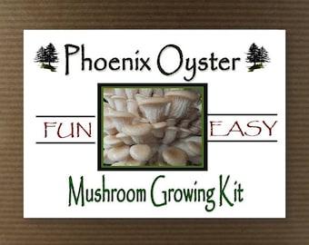Phoenix Oyster Mushroom Growing Tissue Kit Project