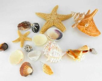 seashells bridal beach wedding shells natural shells seashell assortment sea shells wedding nautical
