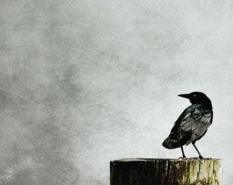 Crow Photography Sea Crow Muted black gray wall art Beach Coastal Shore Crow Print 8x8