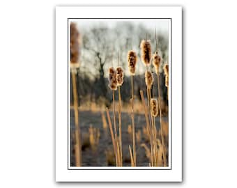 Photo Note card with Envelope, Nature Cattails Photo Card, Blank inside, Thank You card