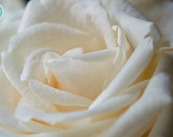 White Rose Photography Print, Petals, White, Photography, Print, Fine Art, Macro, Elegant, Roses, Beautiful