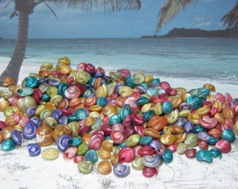 Tiny shells dyed rainbow colored mini seashells 1oz for miniature beach seashore crafting scrapbooking mixed media kawaii decoden