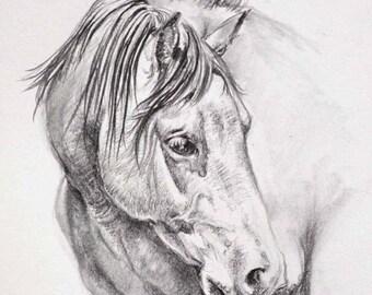 Original Horse Pencil Drawing