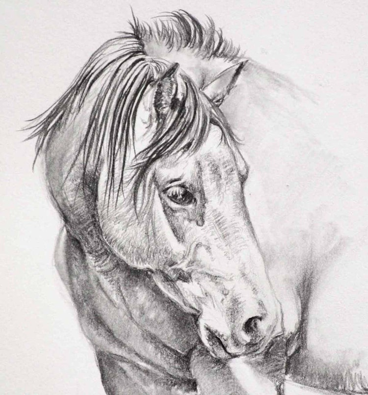 Original horse pencil drawing by jamesskilesart on etsy for Disegni di cavalli a matita