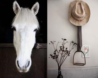Saying Hello. Animal Photography  Collage. Nature Photography.