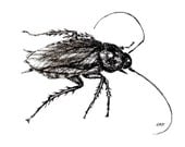 Original Drawing or Limited Edition Print -Palmetto Bug Cockroach in black pen and ink
