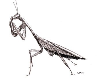 Original Drawing or Limited Edition Print-Praying Mantis  in black archival ink.