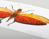 Giant Grasshopper - Original Watercolor and ink painting