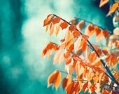 """Teal Orange Photography - turquoise coral aqua nature print autumn fall wall art large photo branches picture branch photograph, """"Embrace"""""""