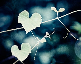 "Hearts in Nature Photography, love leaves leaf botanical print blue dark navy green photo grapevine large wall art, ""For the Love of Nature"""