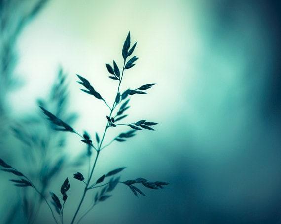 "Nature Photography - dark turquoise teal wall art aqua blue print modern photo botanical - 16x20, 11x14, 8x10 Photograph, ""Sleep to Dream"""