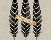 Bird Feathers Instant Download Digital Image No.146 Iron-On Transfer to Fabric (burlap, linen) Paper Prints (cards, tags)