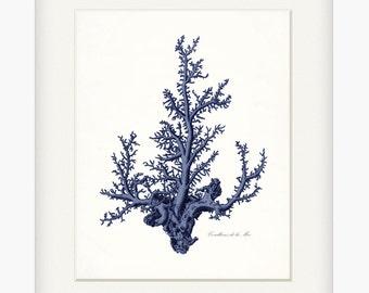 Coastal Decor Antique Pacific Sea Coral Giclee Art Print Indigo