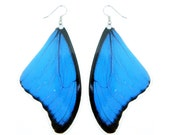 Real Blue Morpho butterfly wing earrings (Large size) - Butterfly Wing Jewelry