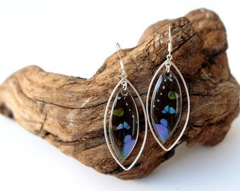 Real Butterfly Wing Sterling Silver Earrings -Graphium Weiskei Top Wing Sterling Silver