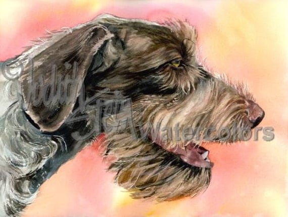 "Wire Haired Pointing Griffon, AKC Sporting, Hunting Gun Dog, Pet Portrait Art Watercolor Painting Print, Wall Art, Home Decor, ""The Griff"""