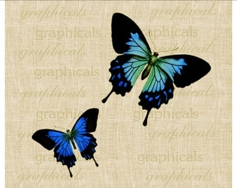 Cobalt blue butterflies Instant digital download image for decoupage Iron on fabric burlap transfer Papercraft Pillow Tote bag Item No. 2076