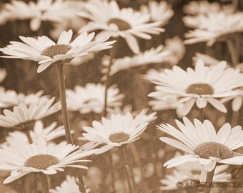 Vintage Daisies Photo Canvas, Wall Art, Home Decor  (8x12 / 12x18 / 16x24 / 20x30)