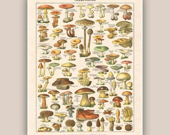 Mushroom art, mushroom print, botanicals kitchen art, kitchen decor,  kitchen art, educational poster, kitchen decor, kid room decor, 11x14