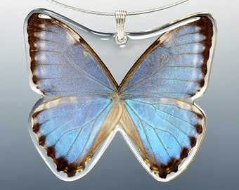 Real Whole Butterfly Pendant Necklace, Blue Morpho Zephyritis