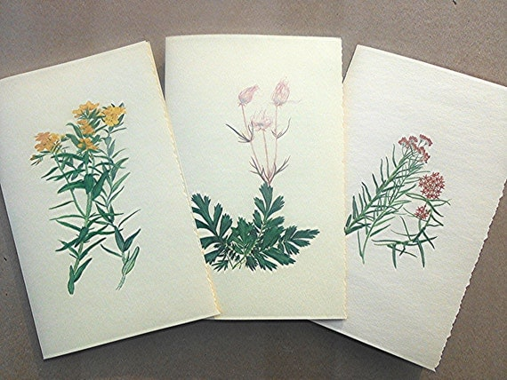 Botanical watercolor Set of 7 large Gift cards giving historic herbal use of plant - Native American plants in watercolor