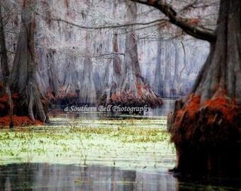 Swamp Photos Bayou Print Art Nature Water Photography Red Moss 8x10 Trees Fall Trees Swamp Lake Photo Water Red Tree Louisiana Bayous 20