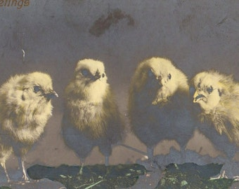Cute Antique Tinted RPPC Easter Greetings Postcard 1908 Little Yellow Chicks