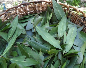 Bay leaves fresh bay leaves bay l eaf herbs dried herbs dye
