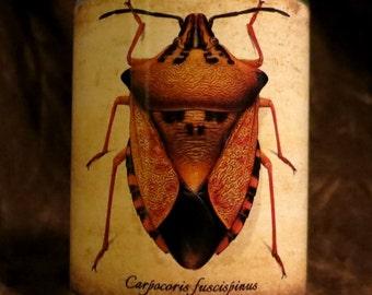 Bug Candle holder/ luminary Carpocoris fuscispinus