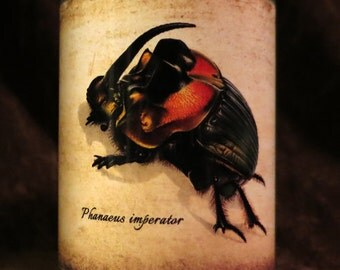 Insect Candle holder/ luminary Phanaeus imperator