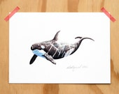 Orca - an Aquatic Beastie print