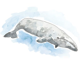 Watercolour Grey Whale Print