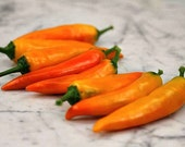 Tequila Sunrise, sweet heirloom pepper, 15 seeds, zippy flavor, great fresh or roasted, compact plants, ornamental, showy container plant