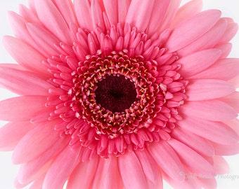 Pink Gerbera Daisy, Fine Art Photography, Flower Photography, Floral Photography, Botanical Print, Daisy Photo, Garden, Pink Daisy