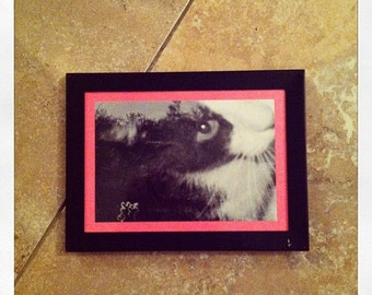 Can Haz Cactis-Fase?- Original framed double-exposed 35mm print