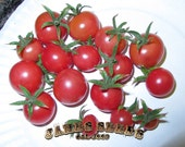 Napa Rose Pink Cherry Tomato Seeds - Amazing Taste and yield!!