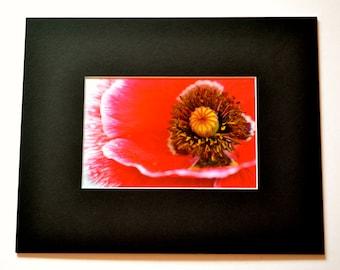 "Mounted Original Photograph - 8 x 6"" - Poppy Close-Up"