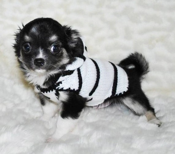 Chihuahua clothig chihuahua clothes sweater dog sweater jumper, puppy clothes sweater, knitted dog clothes, dog clothing small dog costume