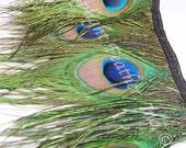 Peacock Eye Feather Trim on satin ribbon, per YARD (trmpeadY)