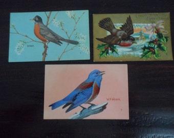 vintage original post cards Bird prints Lot of 3