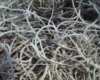 Spanish Moss for crafts