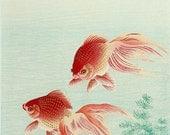 Japanese art, Fish paintings, Goldfish Ohara Koson FINE ART PRINT, japanese woodblock prints, art prints, wall art posters, japan home decor