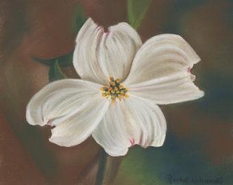 Dogwood Blossom Pastel Painting - Print
