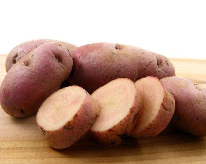 Red Thumb Fingerling Seed Potatoes Certified Organic 3 Pounds Gourmet Red Seed Potatoes
