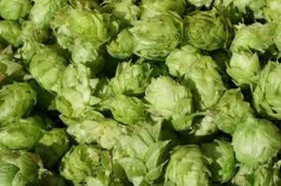 Fresh CASCADE Leaf Hops For Making Home Brewed Craft Beer 1 oz Package