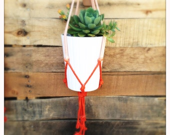 cotton plant latin singles Find and save ideas about cotton on pinterest | see more ideas about cotton plant, cotton decor and best cotton sheets.
